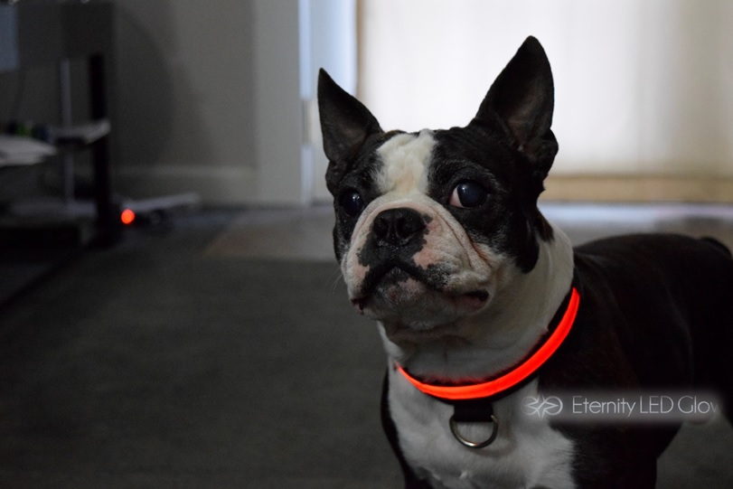 Car Light Bulbs >> LED Dog Collar - LED Glow in The Dark Dog Collars