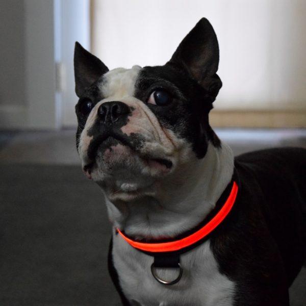 Lighted Dog Collars